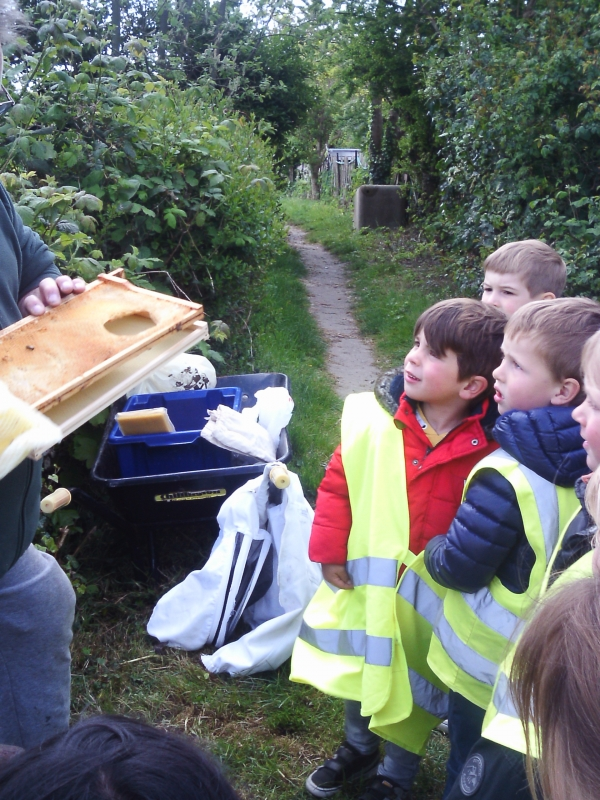 Gallery Image from Barbies Footsteps - Busy bees at the allotment